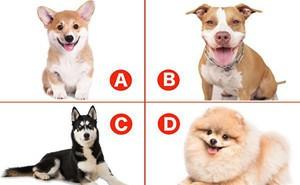 Chú chó yêu thích nói gì về tính cách của bạn?