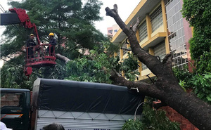 Mưa kèm gió mạnh ở Sài Gòn làm sập mái nhà, cây xanh ngã đè xe tải
