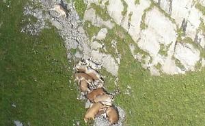 Bí ẩn hàng loạt vụ động vật tự tìm đến cái chết