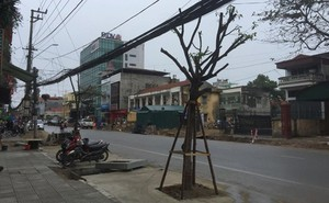 Lạ lùng tuyến phố có hàng cây trồng ngay dưới lòng đường ở Quảng Ninh: Lý giải của Giám đốc