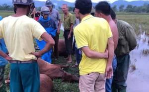 Sét đánh 1 người đàn ông nguy kịch và chết đàn bò 6 con ngoài đồng