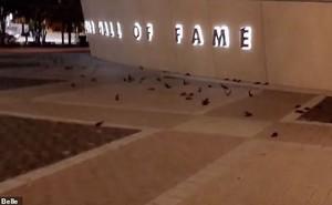 Bí ẩn hàng trăm con chim đồng loạt đâm đầu vào tòa nhà Mỹ