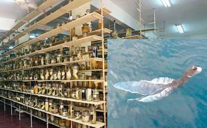 """Viện Hải dương học lớn nhất VN chưa từng ghi nhận """"sinh vật lạ"""" như tà áo dài"""