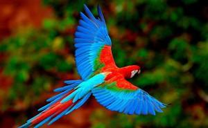 Hình ảnh chú chim đổi màu giải mã cách bạn đối mặt với khó khăn, nghịch cảnh trong cuộc đời mình