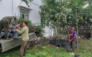 Huyện nghèo chi hơn 400 triệu đồng mua cây xanh trồng thì 50% cây chết