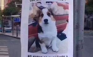 Mảnh giấy dán tìm chó lạc: Hãy đọc kỹ tới dòng cuối nếu bạn không muốn bị mắc lừa