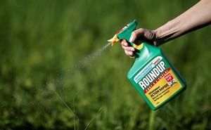 Sẽ cấm thuốc diệt cỏ có hoạt chất glyphosate gây ung thư