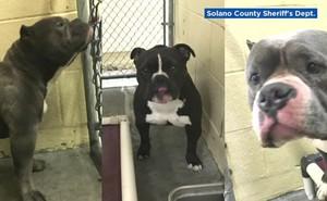 Mỹ xử chó cắn chết người: Chủ đi tù 15 năm cho tội sát nhân cấp độ 2