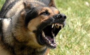 Ra lệnh cho người dân nhìn thấy chó là phải giết, Đức Vua nhận về 1 bài học nhớ đời