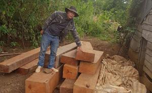 Vụ mật phục 5 tháng bắt quả tang trưởng thôn cùng nhóm đối tượng phá rừng: Phát hiện 5 điểm tập kết gỗ lậu