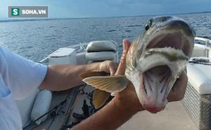 """Phát hiện con cá kỳ lạ có 2 miệng xuất hiện tại hồ được đồn có """"thủy quái Champ"""""""