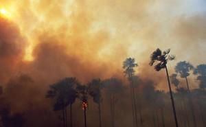 Cháy rừng nhiệt đới Amazon có ảnh hưởng đến sức khoẻ của bạn không?