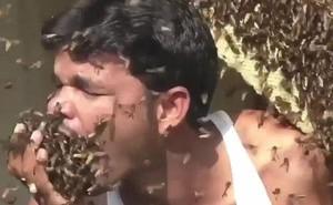 Người đàn ông thoải mái chơi đùa, thậm chí nhét hàng trăm con ong vào miệng