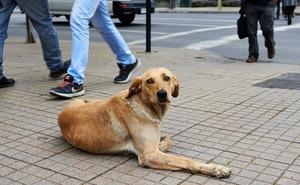Quy định quản lý chó nuôi khắt khe trên thế giới