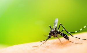 Mách bạn một số cách khiến muỗi không thể đến gần