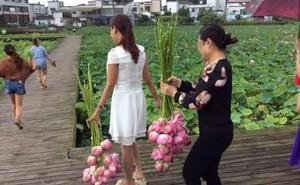 Hàng trăm 'hoa tặc' trèo tường hái trụi sen, công viên 250.000 m2 ở Trung Quốc phải đóng cửa