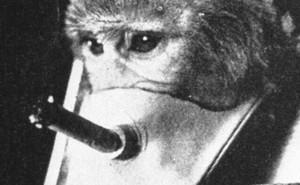5 thí nghiệm tàn nhẫn đến rơi nước mắt trên động vật vẫn đang diễn ra mỗi ngày