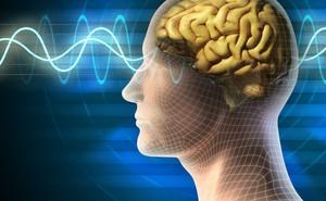 Điểm khác biệt bất ngờ giữa não của kẻ giết người và người bình thường