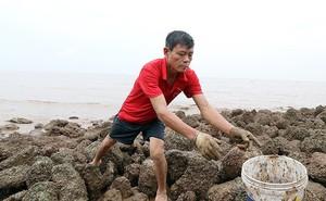 Bão sầm sập ngoài khơi, ngư dân tranh thủ 'nhặt' hải sản trên bờ