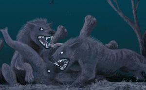 """Loài động vật có vú ăn thịt lớn nhất trên đất liền, được mệnh danh là """"máy xay thịt di động"""""""