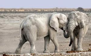 Những loài động vật phát ra tiếng kêu lớn nhất Trái Đất
