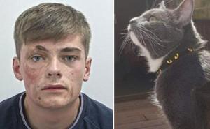 Mèo 'nhà người ta' biết cào vào mặt trộm để tố cáo hắn với cảnh sát, mèo nhà bạn đã làm được gì?