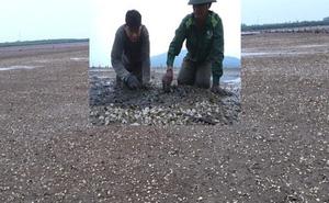Hé lộ nguyên nhân khiến hơn 263 tấn ngao chết bất thường ở Hà Tĩnh