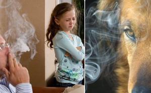 Không chỉ hại con người, hút thuốc lá khi đang nuôi chó mèo chính là giết chết chúng