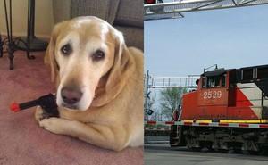 Dừng xe đợi tàu, người phụ nữ bất ngờ bị... chó bắn vào chân phải nhập viện