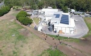 Úc: Kết cục bi thảm của những con ngựa đua từng hái ra tiền