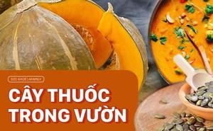 Loại quả dùng để nấu vô khối món ngon, ăn vào giúp da siêu đẹp và còn là thuốc quý được Đông y trọng dụng