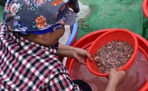 Ảnh: Về Hải Phòng xem nông dân săn 'lộc trời', kiếm hàng chục triệu đồng mỗi ngày