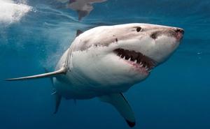 Phát minh bộ quần áo lặn chống cá mập tấn công
