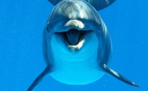 """Sự thật siêu dễ thương: Hóa ra cá heo cũng có """"tay thuận"""", và nó giống loài người đến ngoài sức tưởng tượng"""