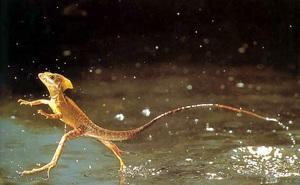 1001 thắc mắc: Kỳ lạ vì sao một số loài côn trùng đi lại băng băng trên nước?