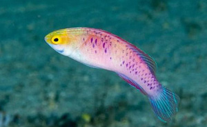 2019 khoa học đã tìm ra những gì: Hơn 70 loài vật mới cùng một con cá được đặt tên theo đất nước giàu có nhất vũ trụ Marvel