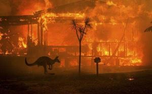 Động vật ở Australia đứng trước nguy cơ tuyệt chủng cục bộ
