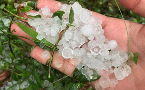 Mưa đá rơi trắng sân tại Hà Nội và một số tỉnh thành chiều mùng 1 Tết