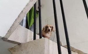 Anh shipper đi giao hàng, bất ngờ gặp lại chú chó đã mất tích cách đây 5 năm