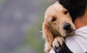 Giải pháp trị liệu và cải thiện sức khỏe toàn diện nhờ nuôi động vật: Có thể bạn chưa biết
