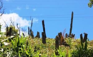 Từ ngày 5/1/2020, vi phạm đất đai sẽ bị phạt đến 1 tỷ đồng