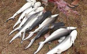 """Mổ bụng cá mập """"khủng"""", choáng váng 9 con vật rơi ra ngoài"""