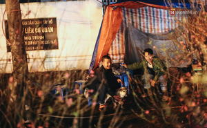 Ảnh: Dựng lều, thức trắng đêm trông đào, quất lộ thiên tại Hà Nội