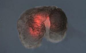 Đột phá: Các nhà khoa học vừa tạo ra một 'dạng sống' hoàn toàn mới trên Trái Đất