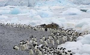 Thước phim tua nhanh về cuộc sống của chim cánh cụt ở Nam Cực