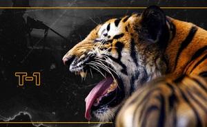 Những con hổ ăn thịt người ở Ấn Độ: Cái giá của sự bảo tồn?