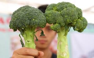 Chị em chỉ việc áp dụng những mẹo quan sát này đảm bảo mua được rau củ quả ngon, không dính hóa chất