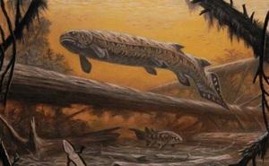 Rhizodus Hibberti: Loài cá quái vật thời tiền sử, sinh vật bá chủ vùng nước ngọt