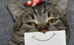 Hóa ra mèo cũng có biểu cảm khuôn mặt, nhưng không phải ai trong chúng ta cũng có thể nhận ra