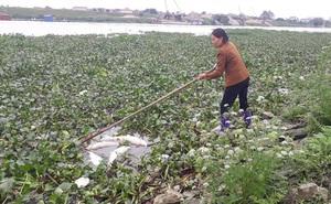 Cá chết trắng trên sông Cầu: Dân mất tiền tỷ
